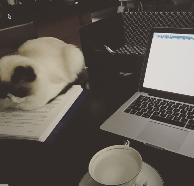 writing-with-cats.jpg