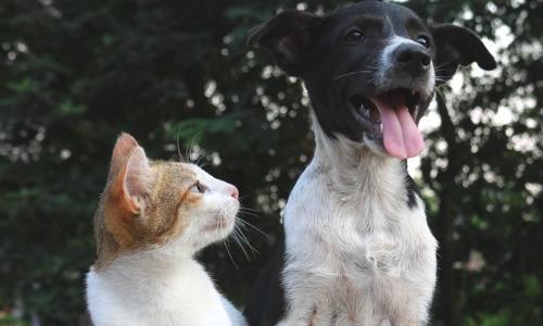 cat and dog pals.jpg