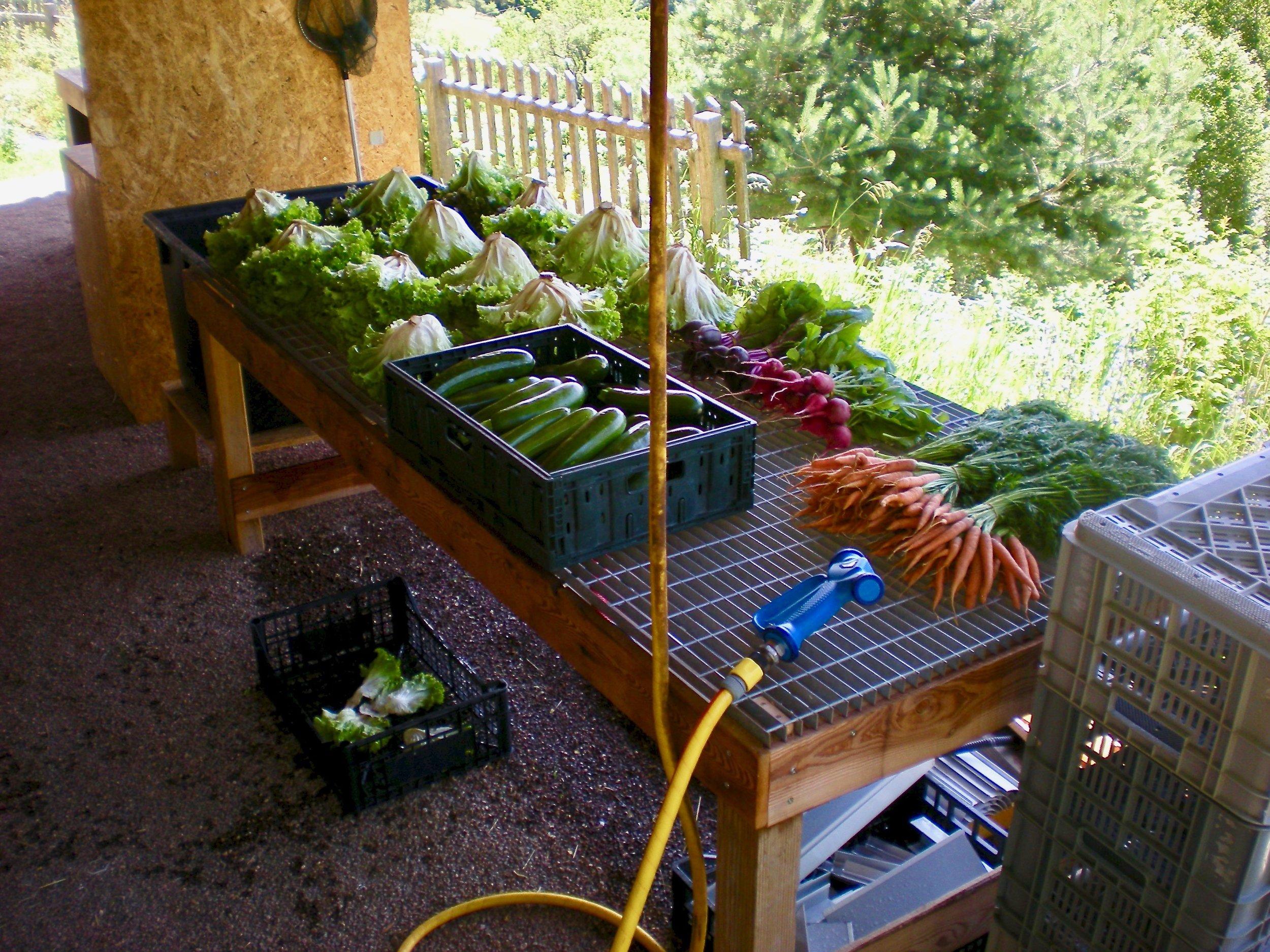 Maso-Zepp-Lean-Farming-washing-station.jpeg