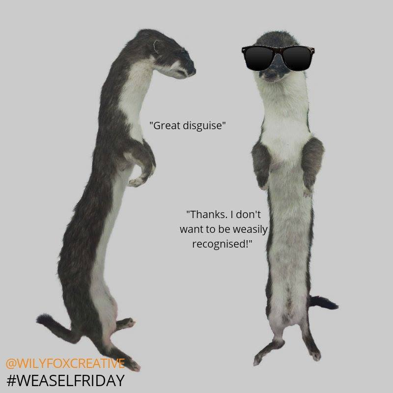 Weasel_Friday_Entry_008.jpg