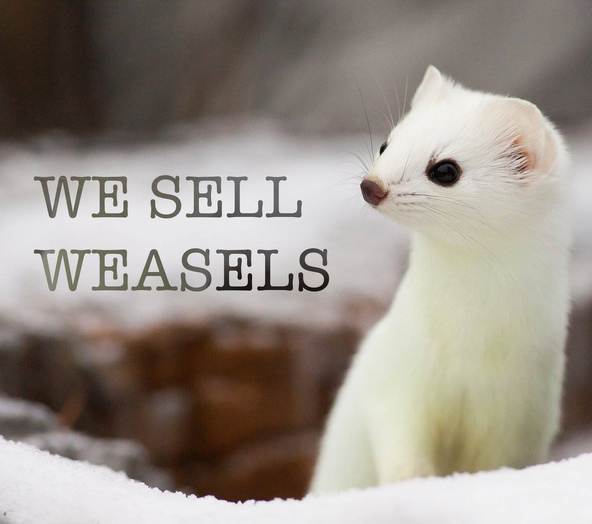 Weasel_Friday_Entry_049.jpg