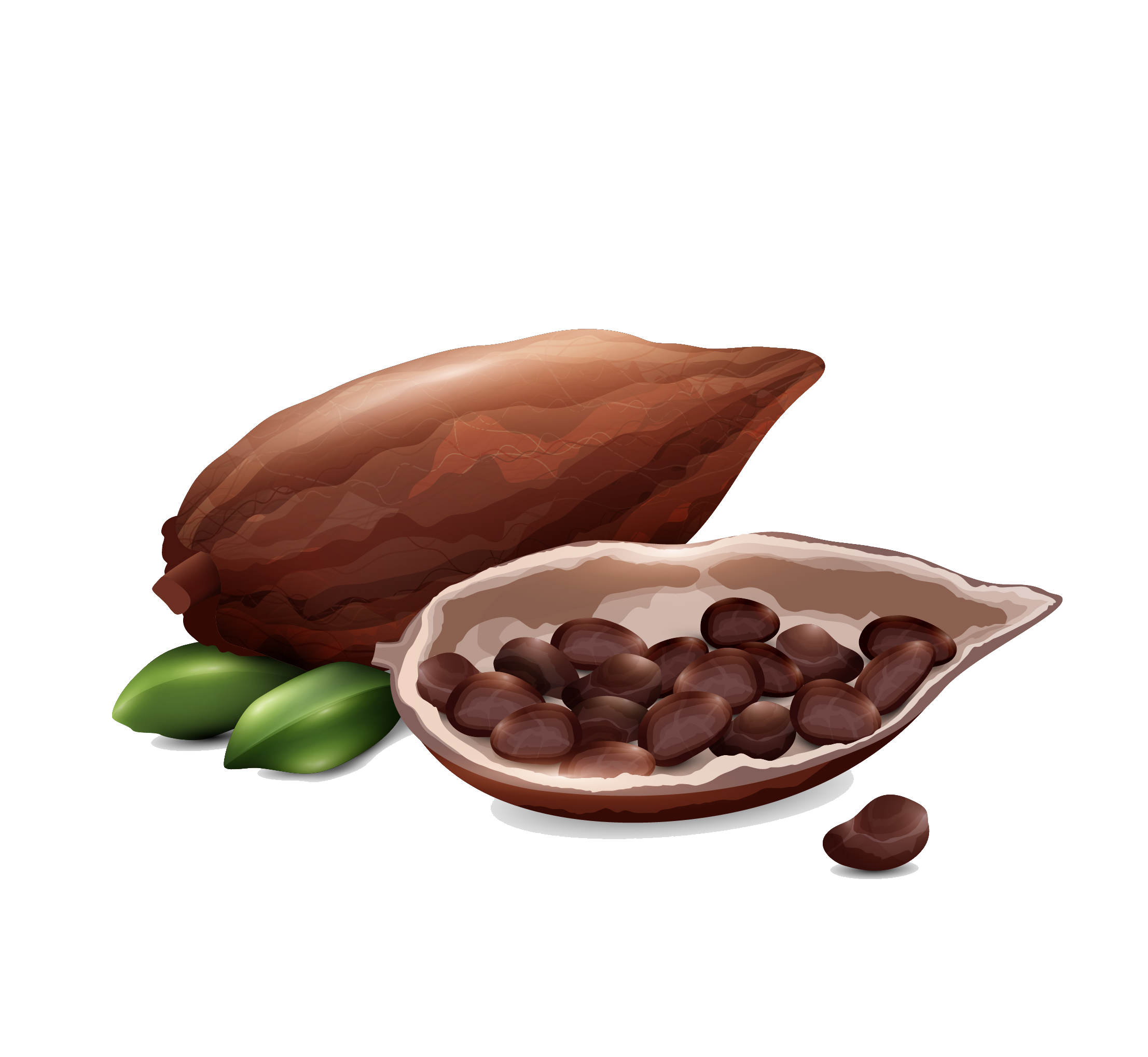 Cacao Bean.png