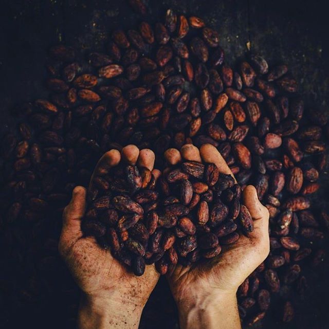 Who wants to experience the magic of cacao? Are you facilitating cacao ceremonies and looking for the most delicious cacao yet? 🍫 ••• This cacao is gathered by hand from wild growing trees, carried on horseback, and sweetly born into medicine songs & prayers by the Ecuadorian woman during the processing of the cacao. It is sun-dried, then small batches are slow ground for 10 hours in a European grinder. 🌻✨ ••• It is smooth and creamy, and doesn't have a bitter aftertaste. It doesn't need sweetener - but dates are the bomb with it!! Cacao has helped me to open my heart and I want to help you open yours! $44 for 1.5 pounds of this goodness!! Shipping is available. PM me for details!! Xx Cacao comes in chunks for easy blending and snacking! ••• More details about the cacao can be found on my website - Link in bio!! 💕🙏🏻 ••• • • • • • #cacao #cacaoceremony #cacaonibs #ceremony #cacaocollective #health #heartopening #heartmedicine #plantmedicine #plants #plantpowered #vegan #vegetarian #healthy