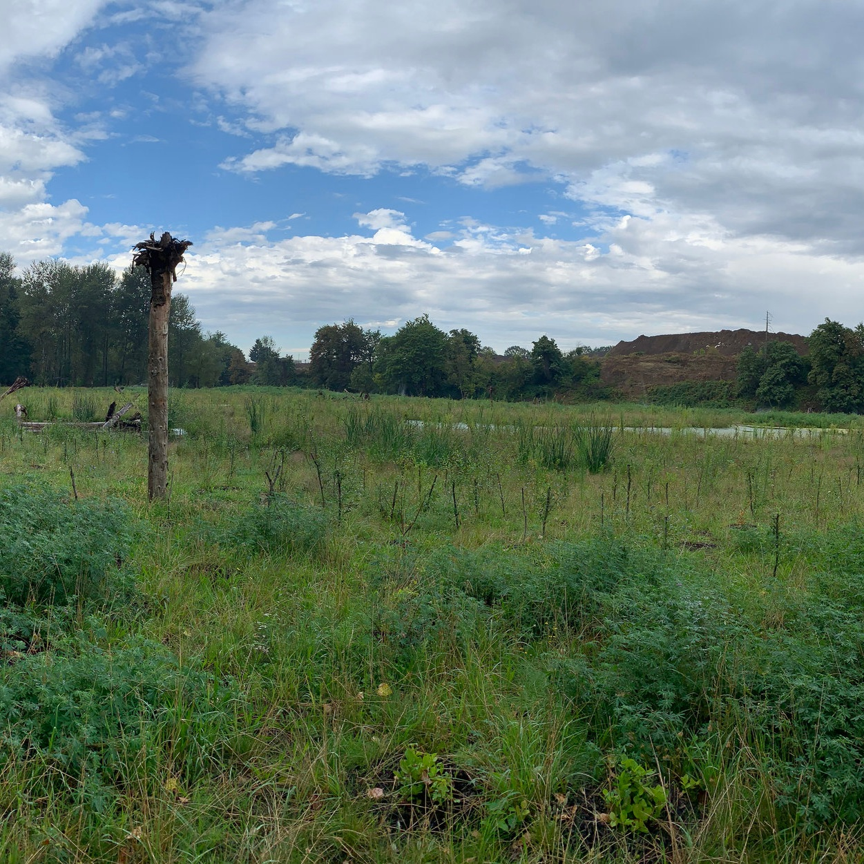 Carli Creek Constructed Wetland and Stormwater Treatment Facility - Herrera and Clackamas County Water Environment Services
