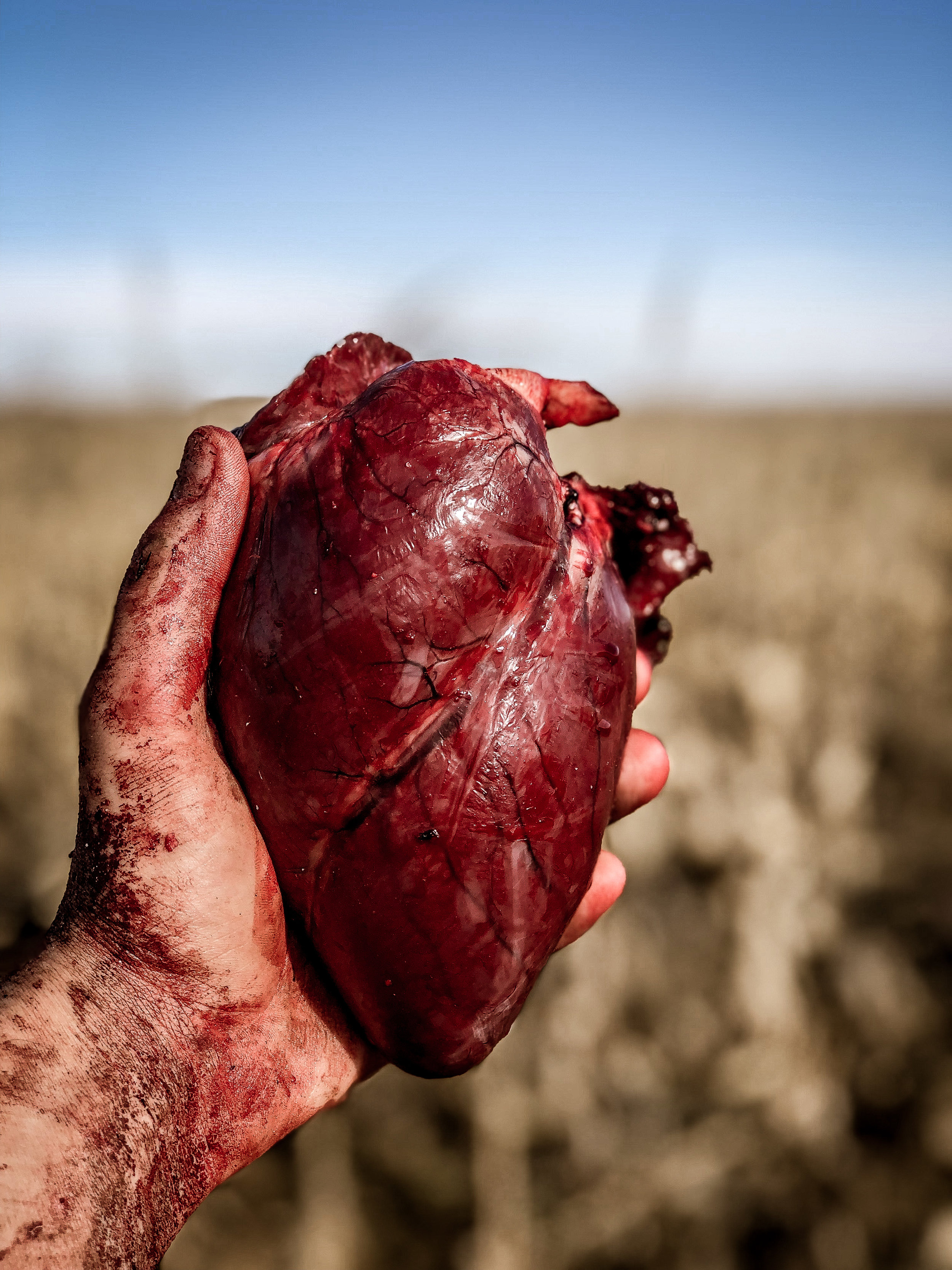 The heart of a whitetail doe.