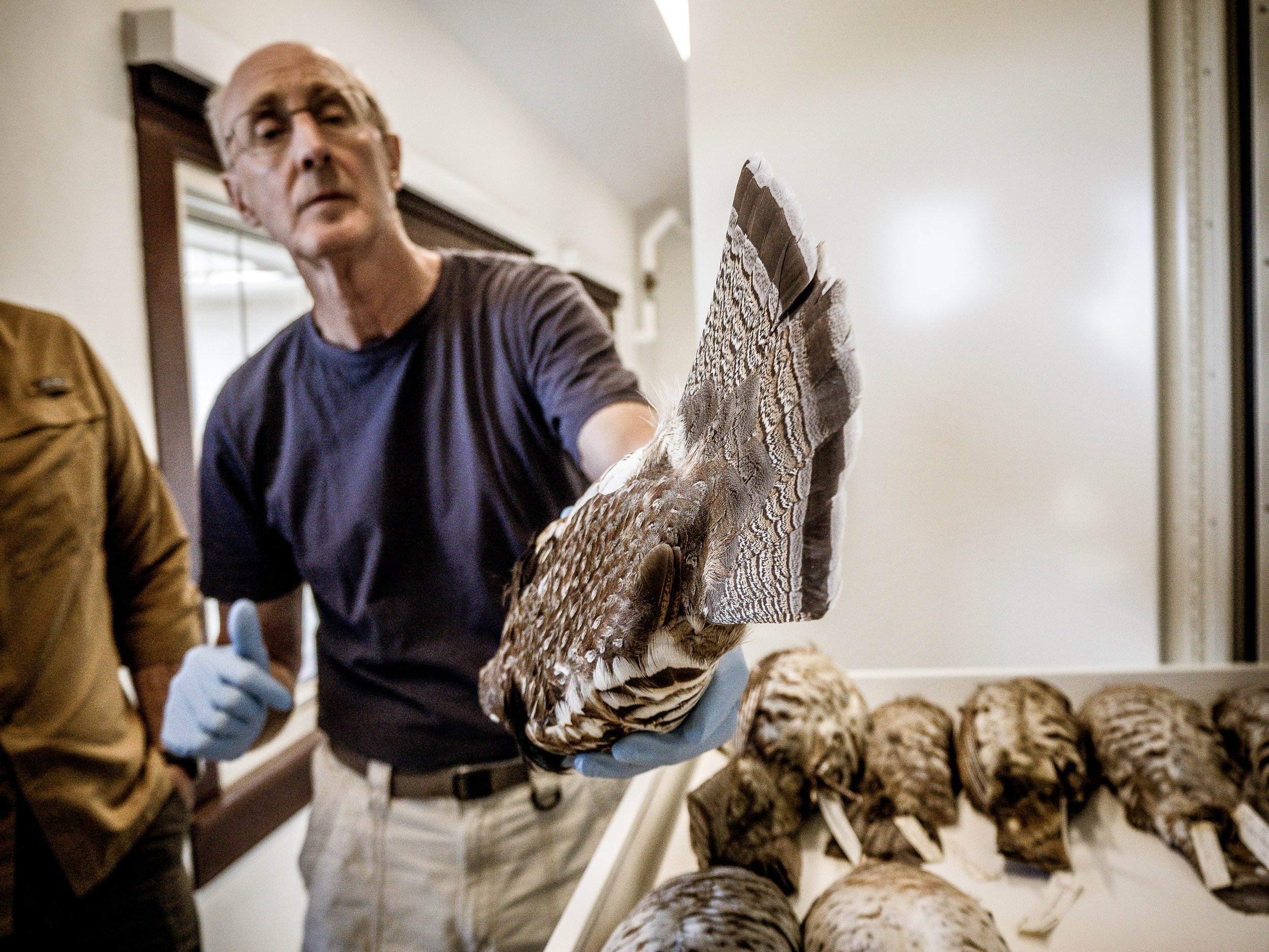 Why this museum curator loves hunters. -
