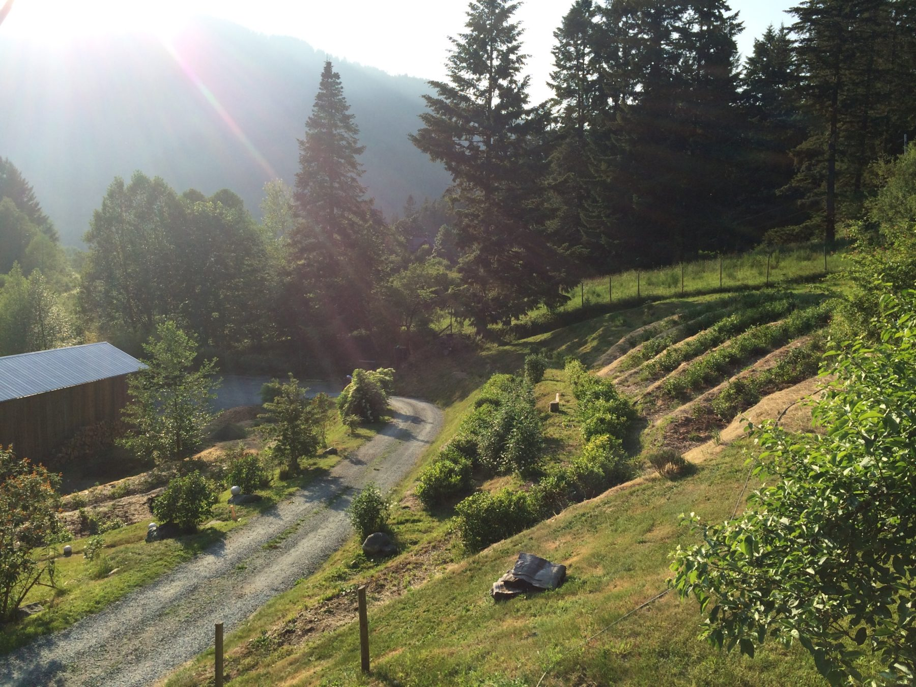 Westholme Teas - Cowichan Valley tea plantation
