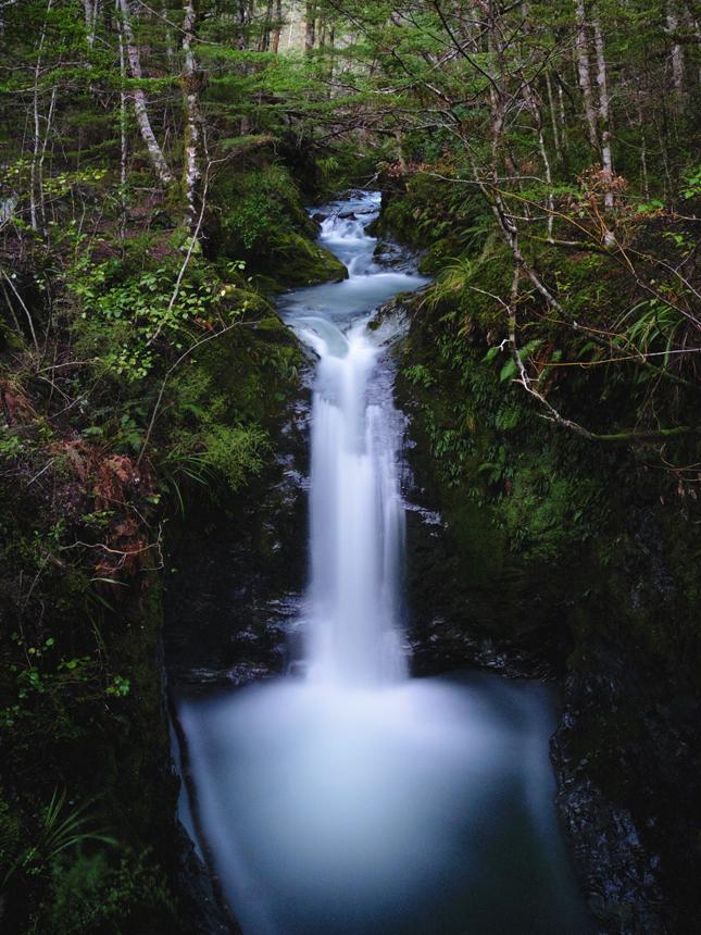 silky - Mount Crichton, New Zealand