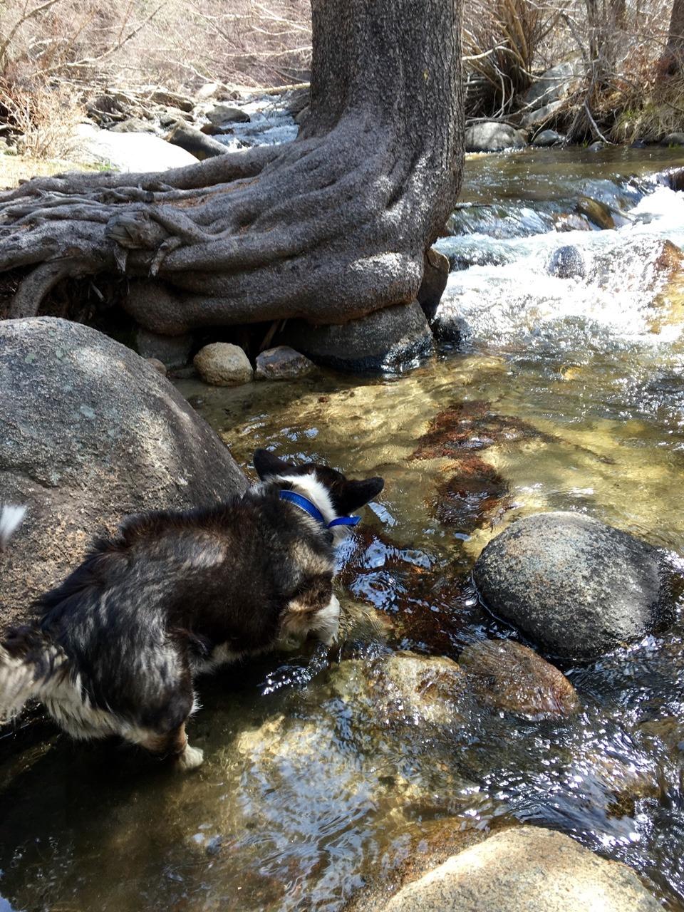 Spock loves Rock Creek