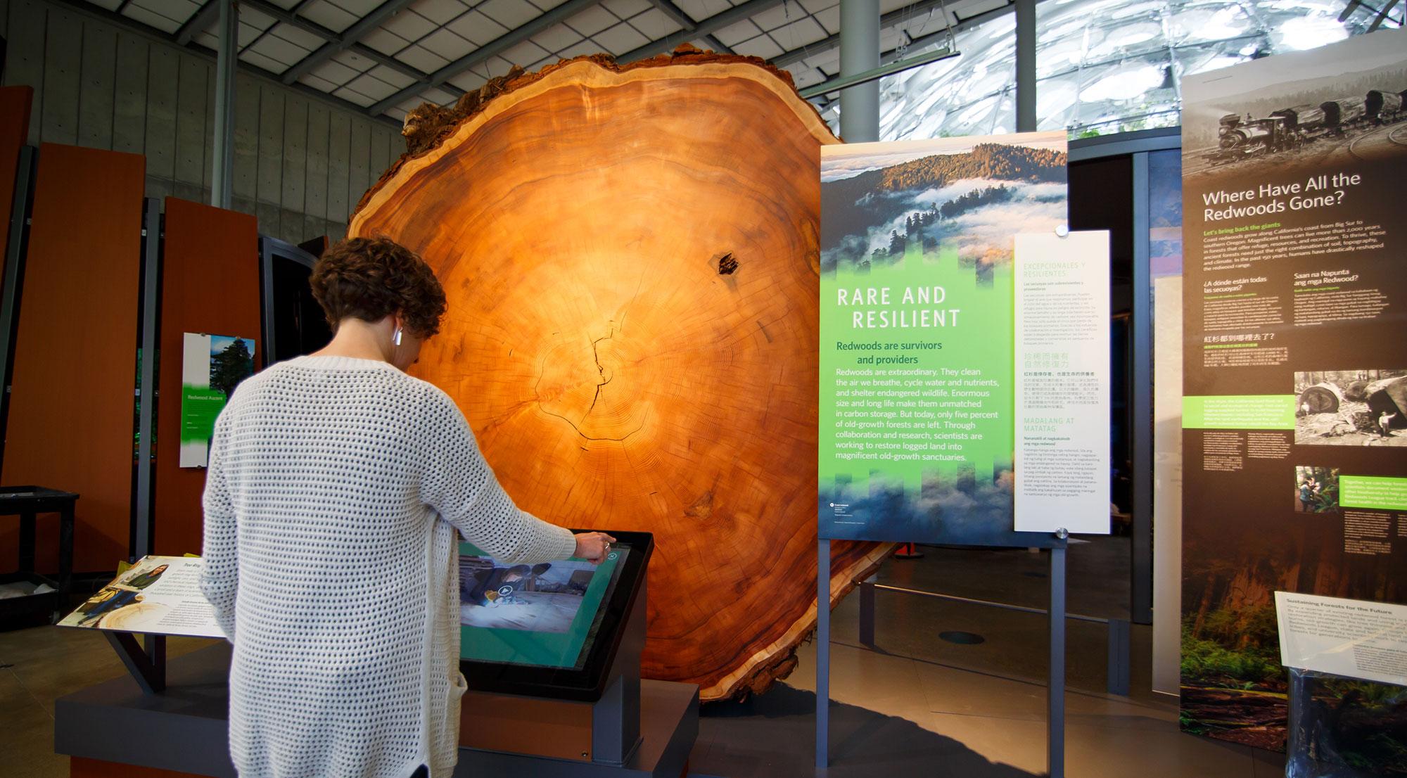 GOLAS-redwood-8.jpg