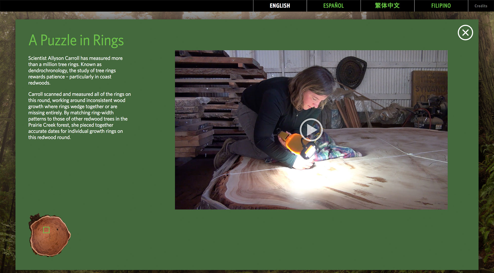 Video about dendrochronology, the scientific process of tree ring analysis
