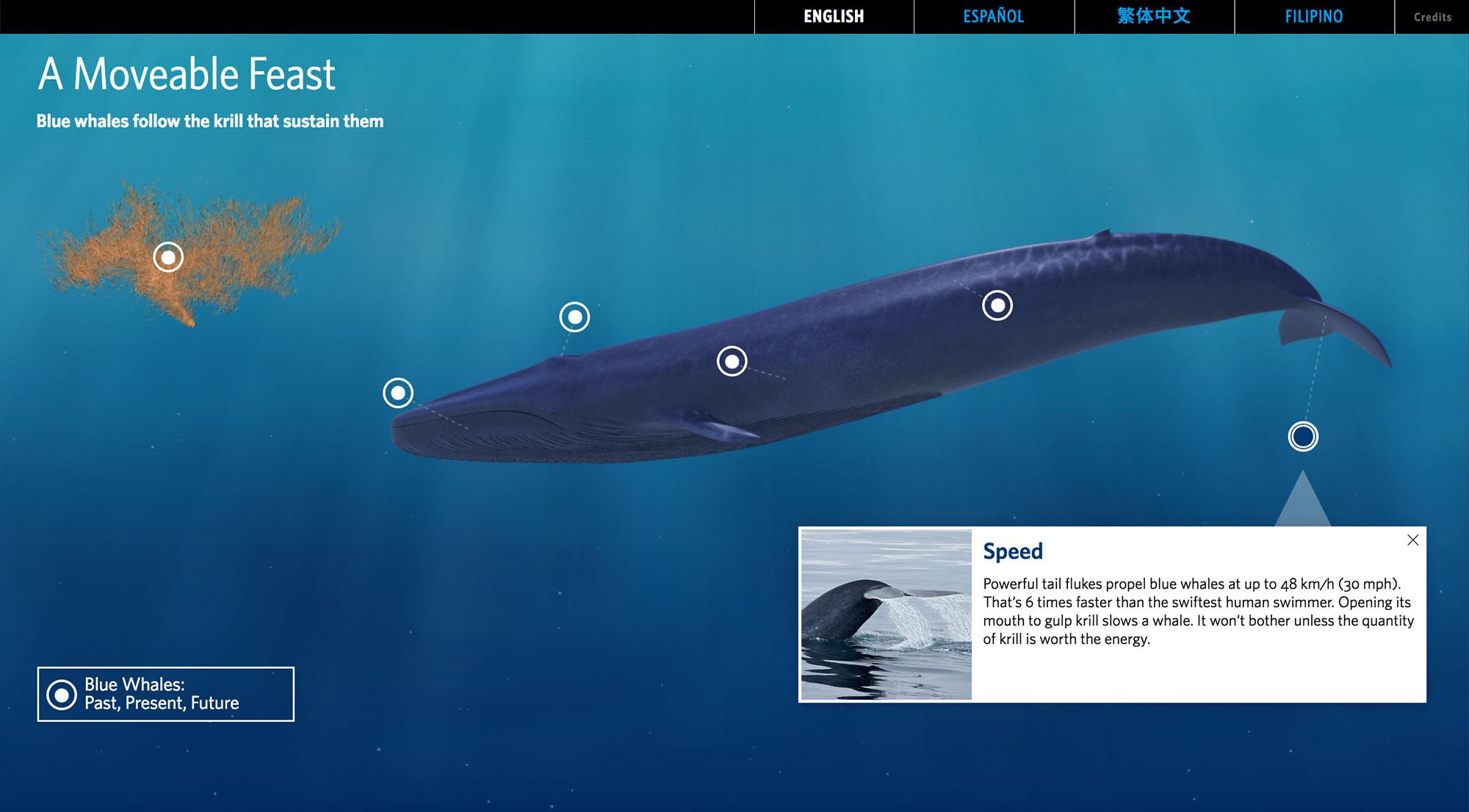 GOLAS-blue-whale-2.jpg