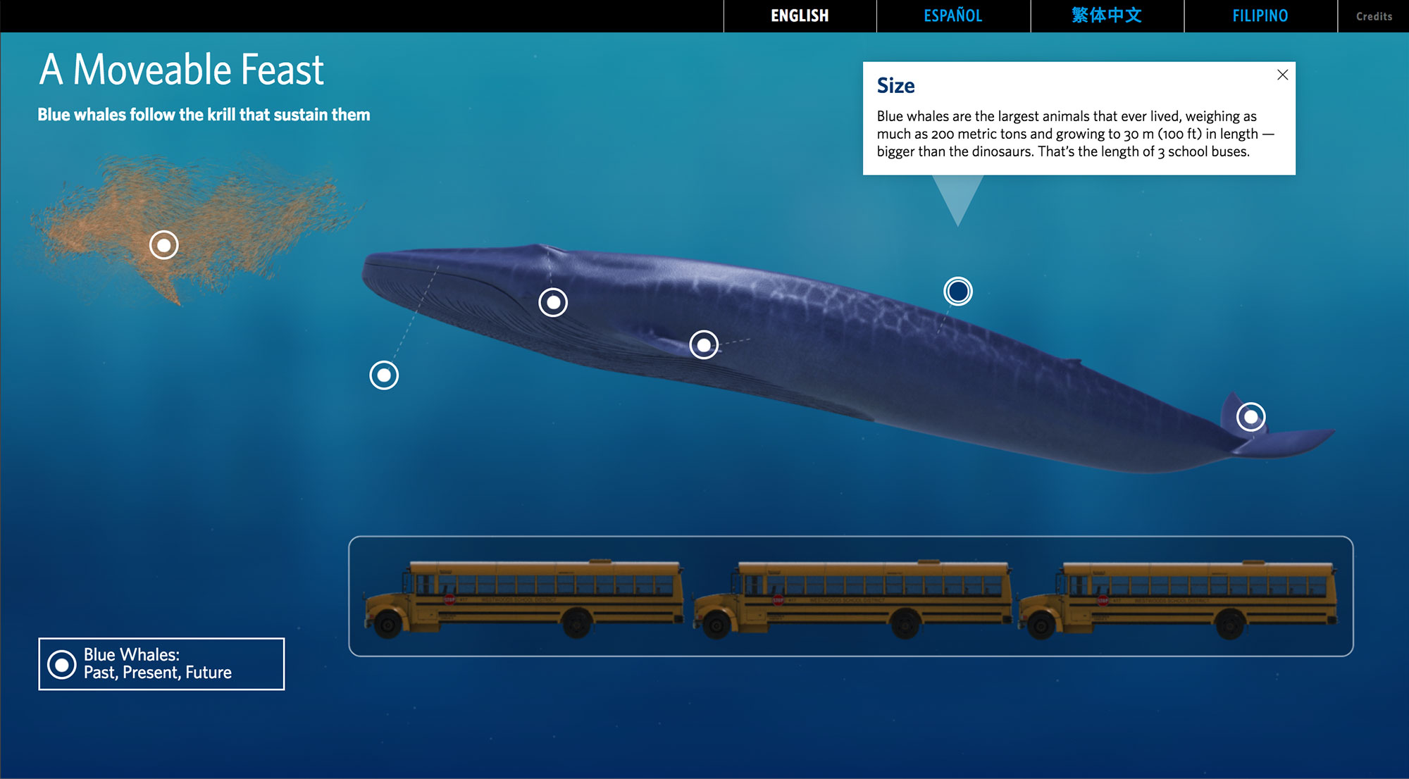 Example of animation used to make the scale of this whale more relateable.