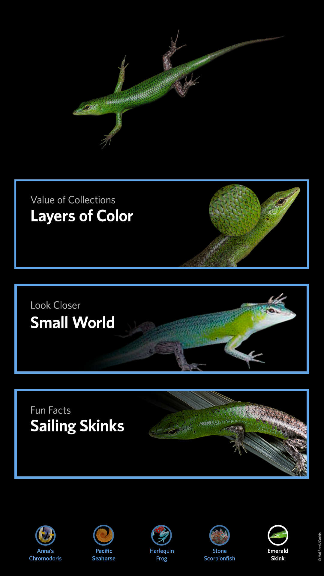 CAS_LC_refresh-skink-05.png
