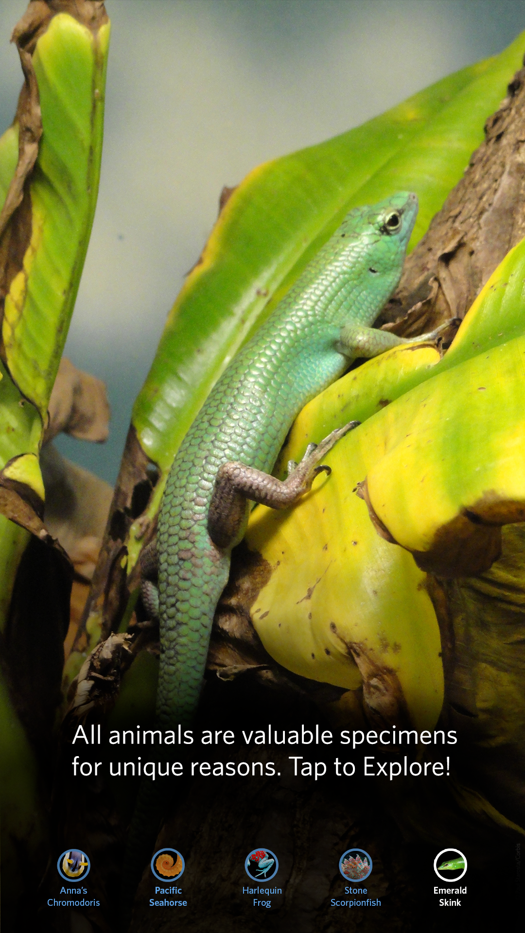 CAS_LC_refresh-skink-00.png