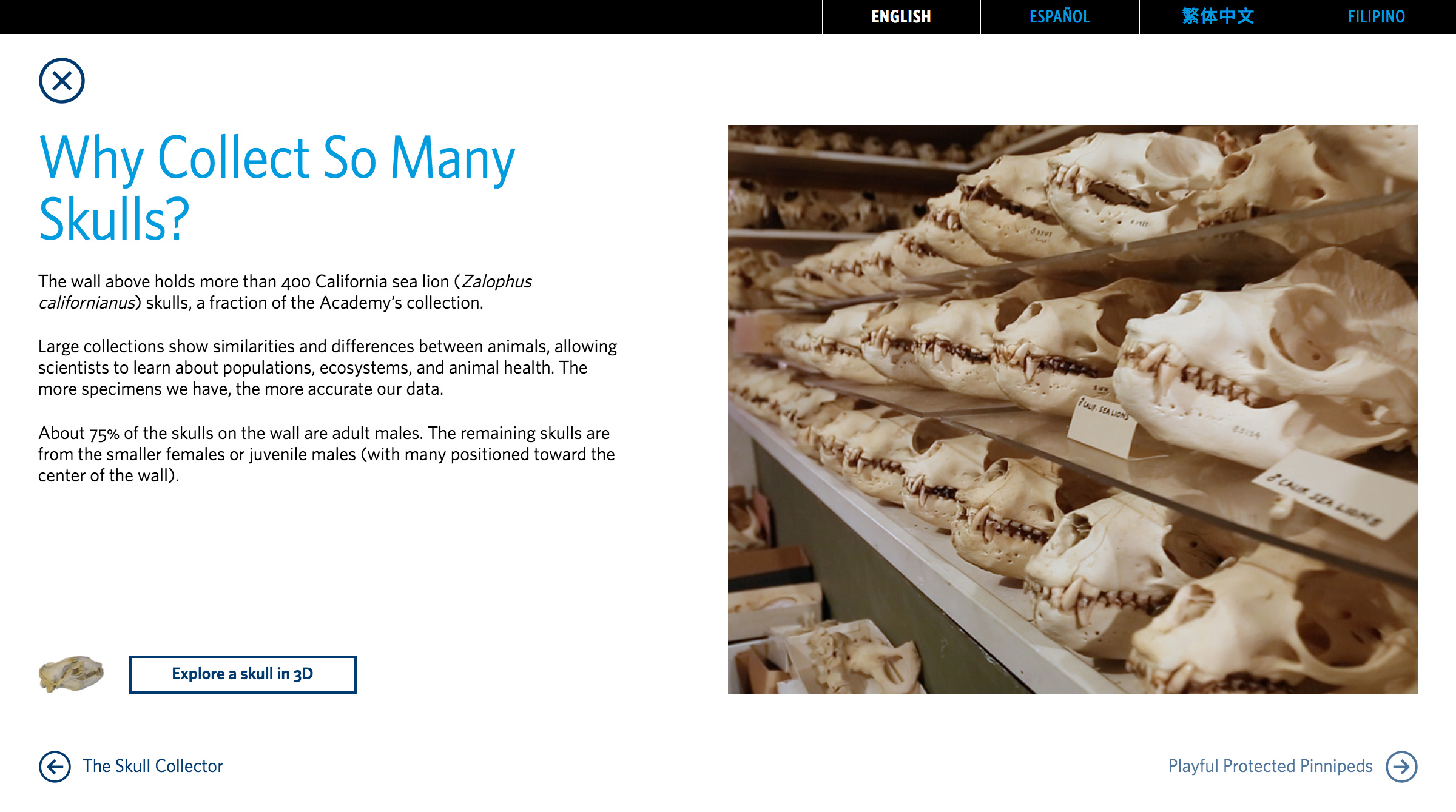 skull-wall_about-the-exhibit-3.jpg