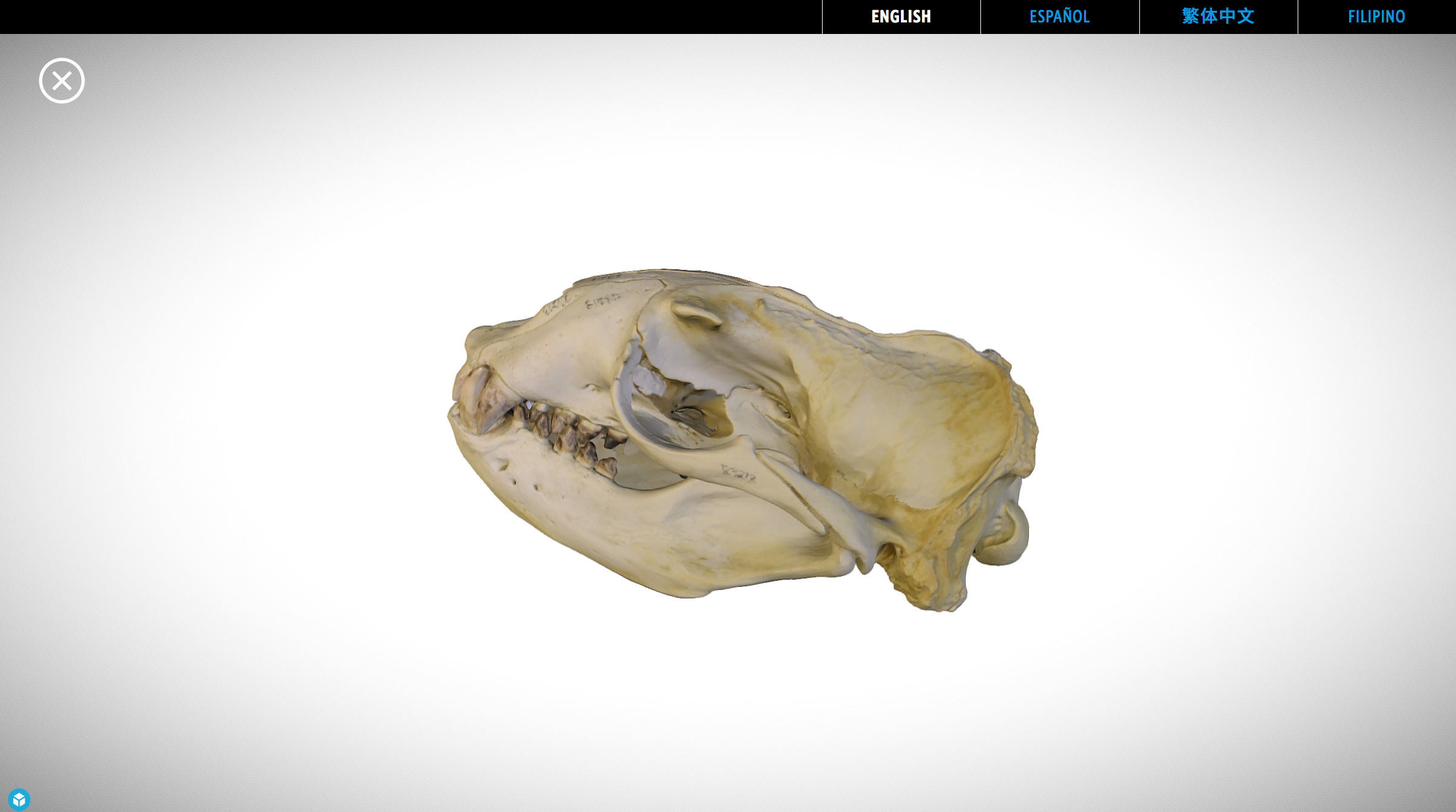 Visitors can explore a 3D rendered skull by spinning model and pinch to zoom