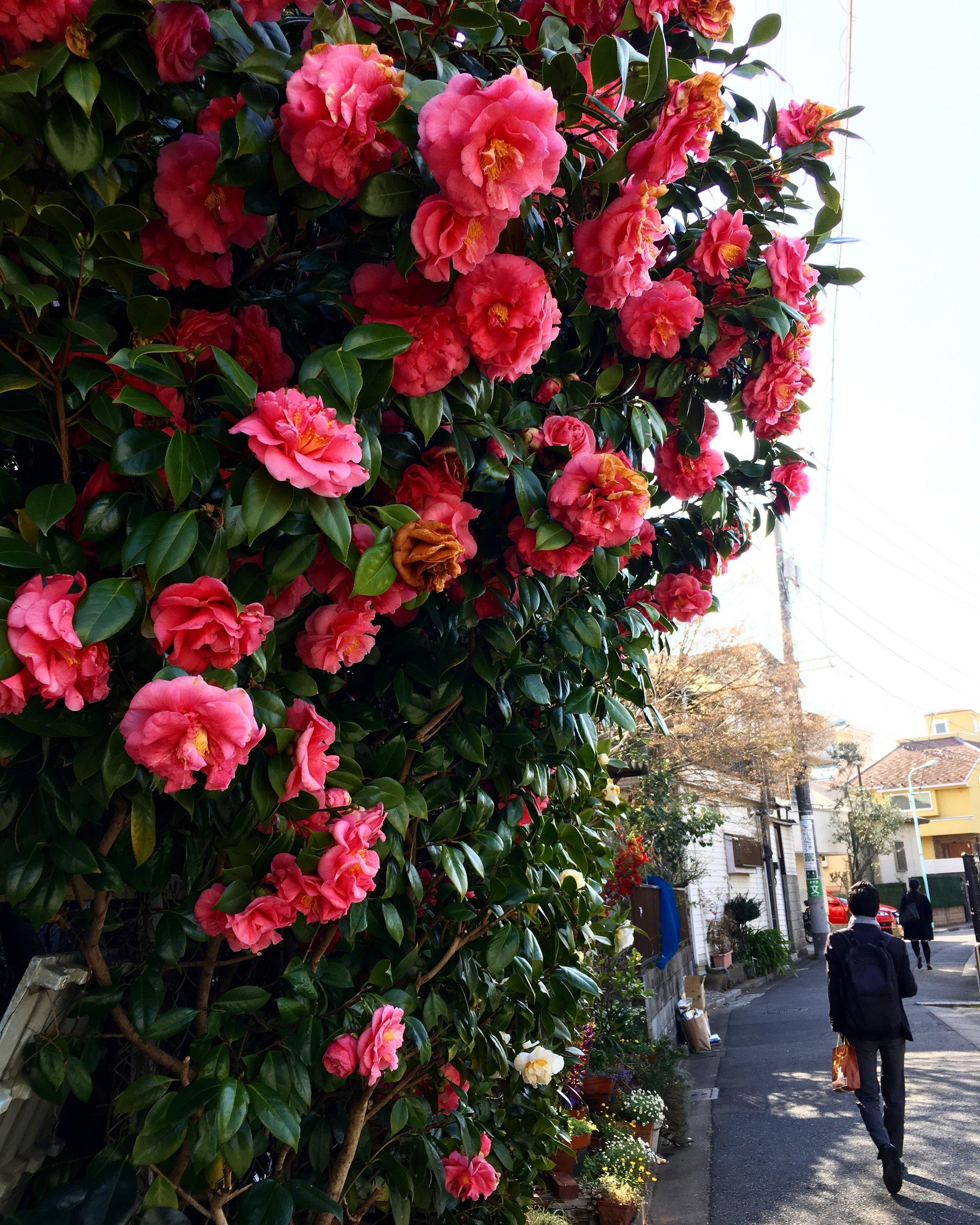 My first love - Tokyo, Japan