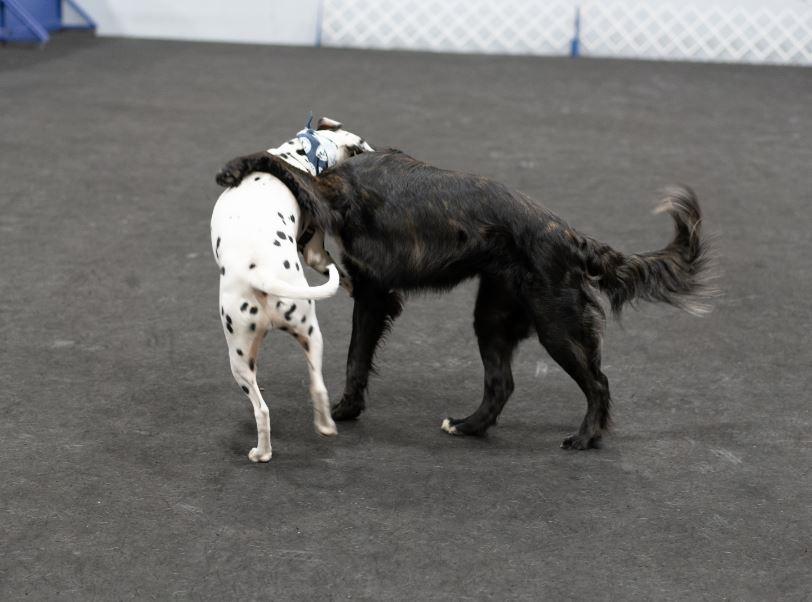 Duke and Charlie