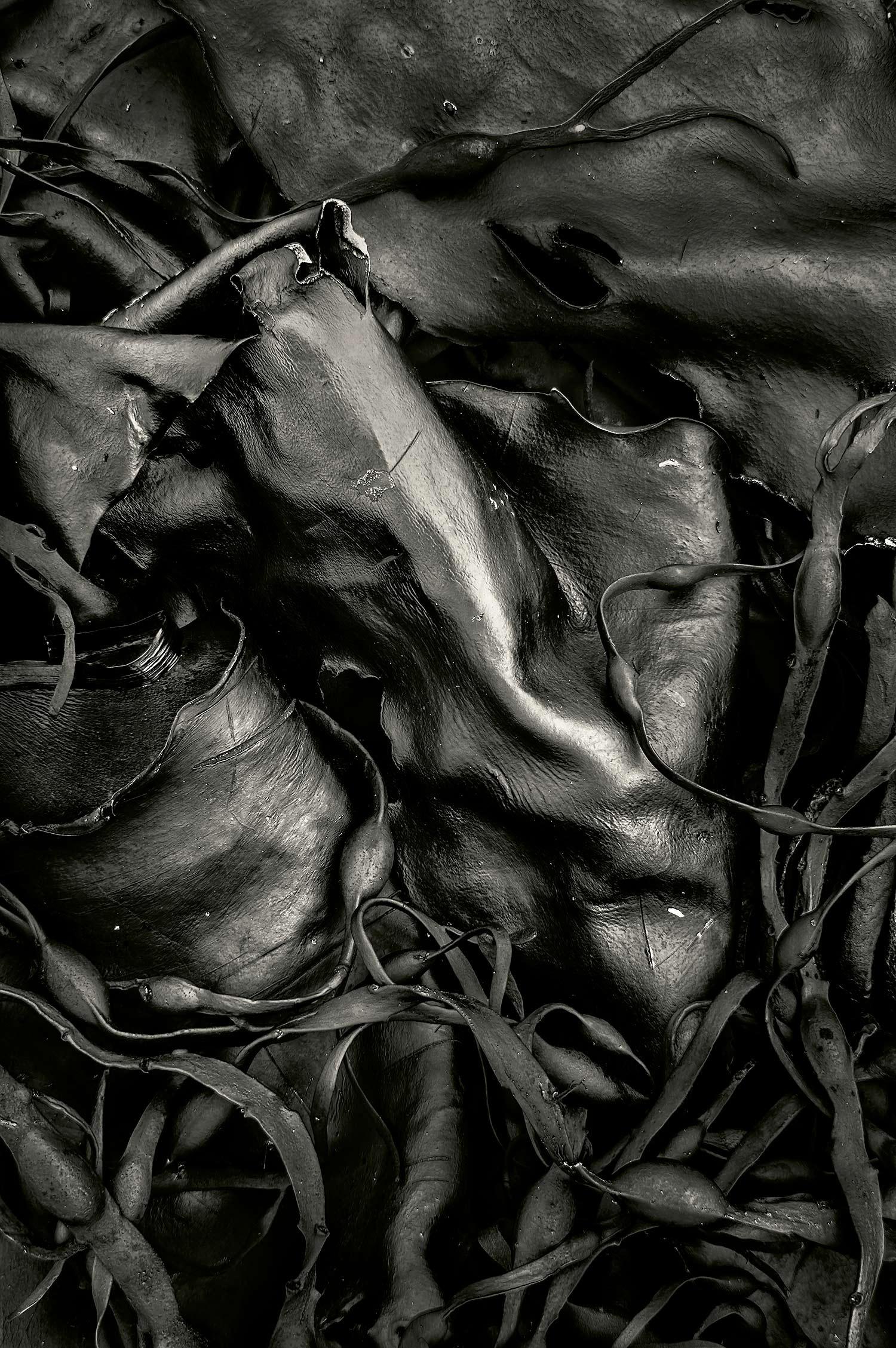 Seaweed 516, Seawall, Maine, 2012