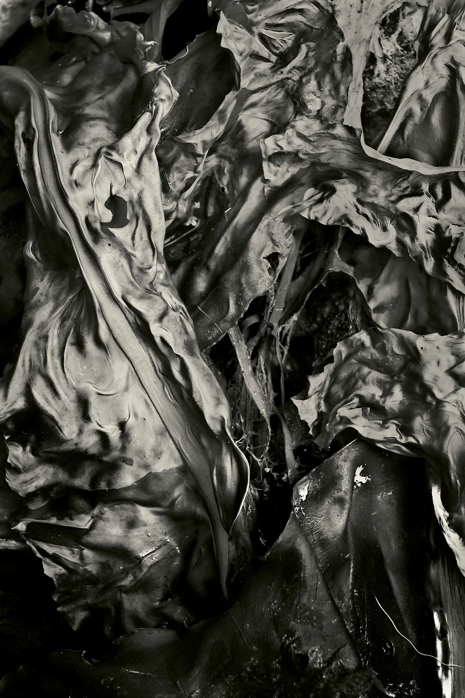 Seaweed 333, Seawall, Maine, 2011