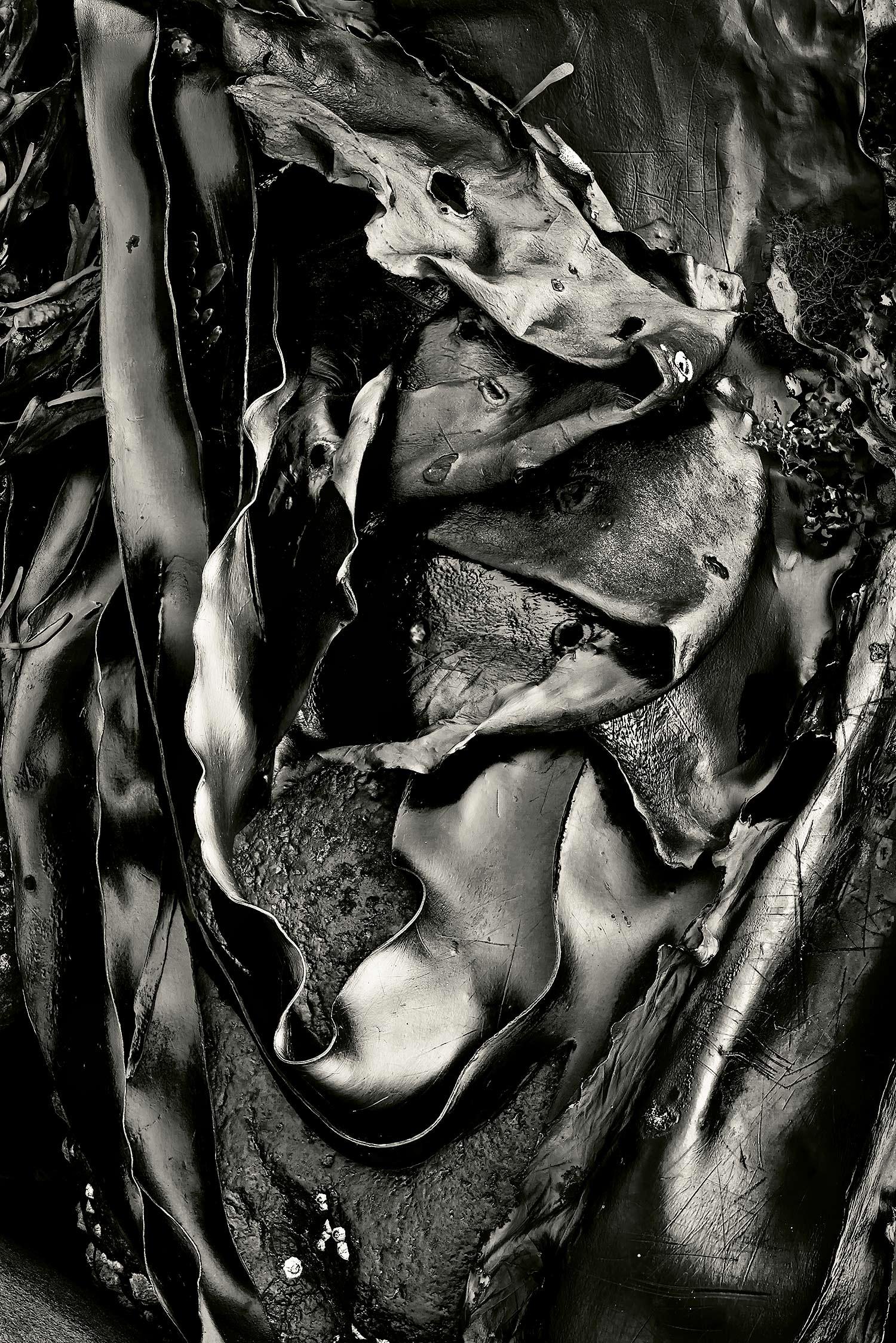 Seaweed 436, Seawall, Maine, 2011