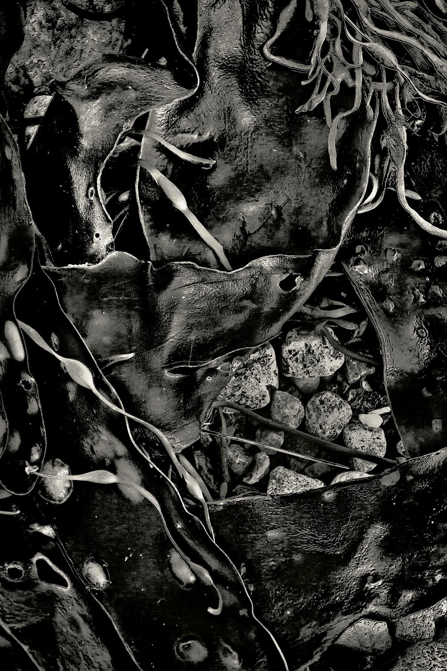 Seaweed 413, Seawall, Maine, 2011