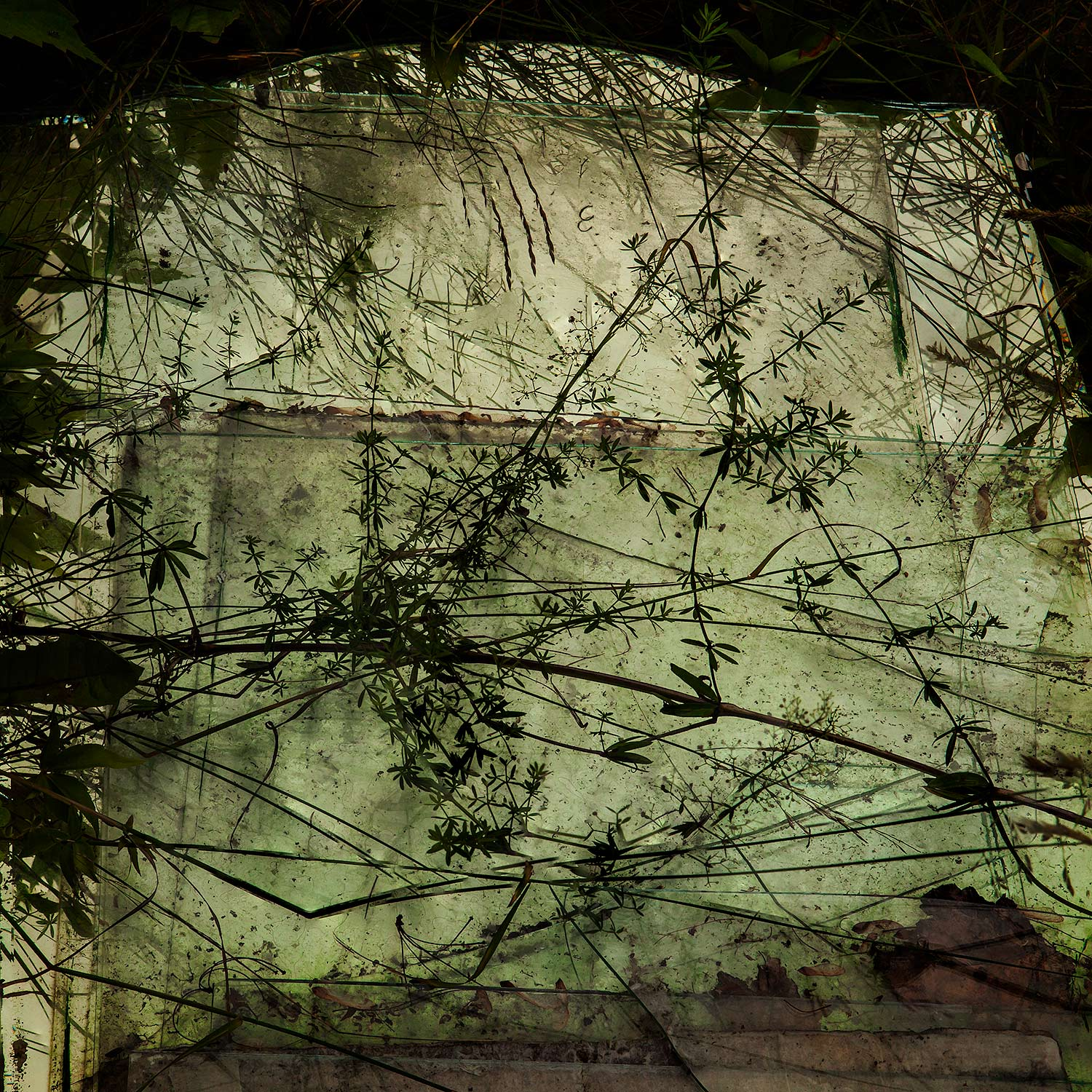 Weeds and Glass, Bar Harbor, Maine, 2014