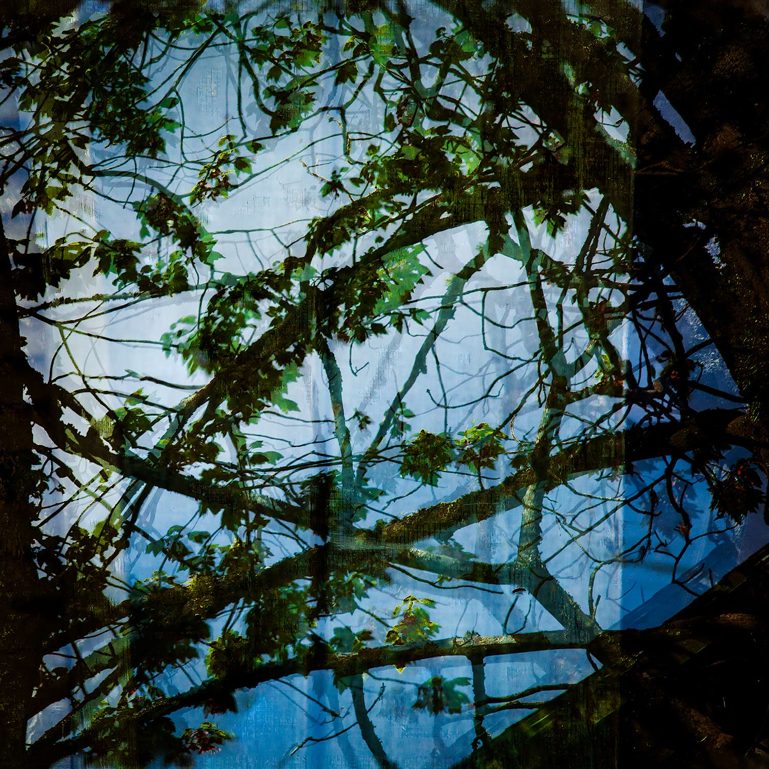 Branches and Plastic, Bar Harbor, Maine, 2014