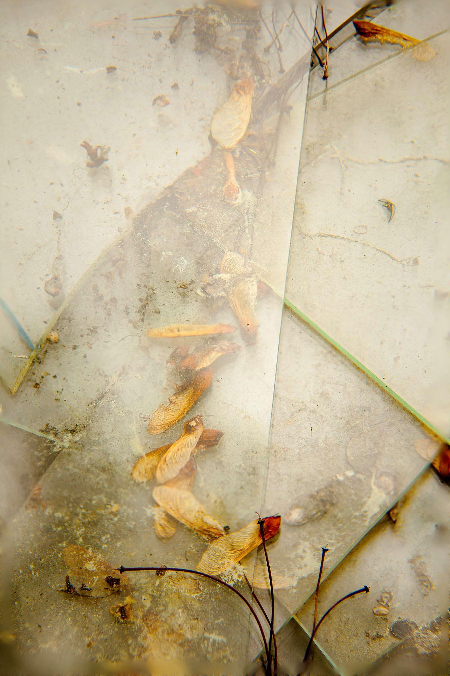 Seeds and Glass, Bar Harbor, Maine, 2013
