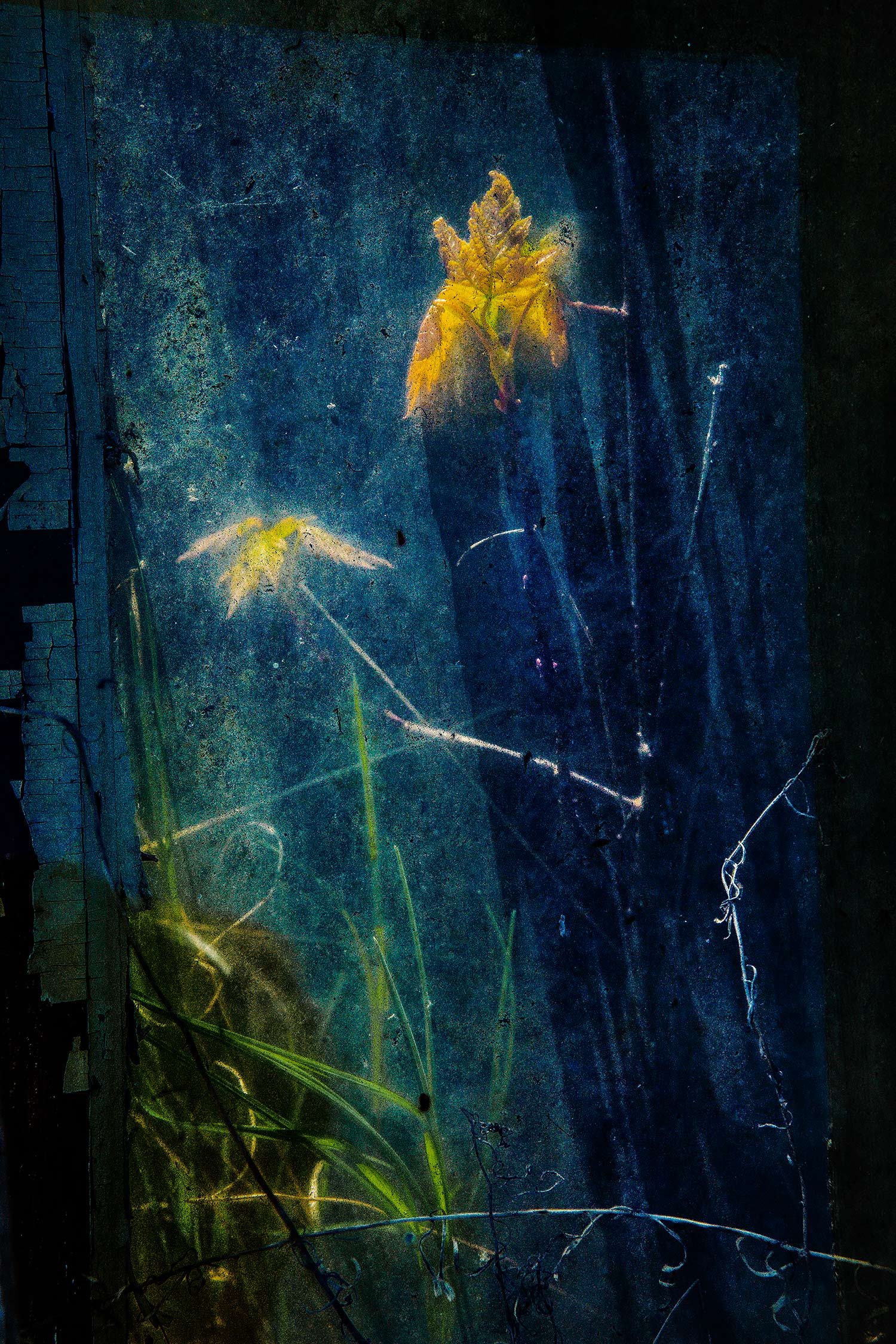 Weeds and Glass, Bar Harbor, Maine, 2010