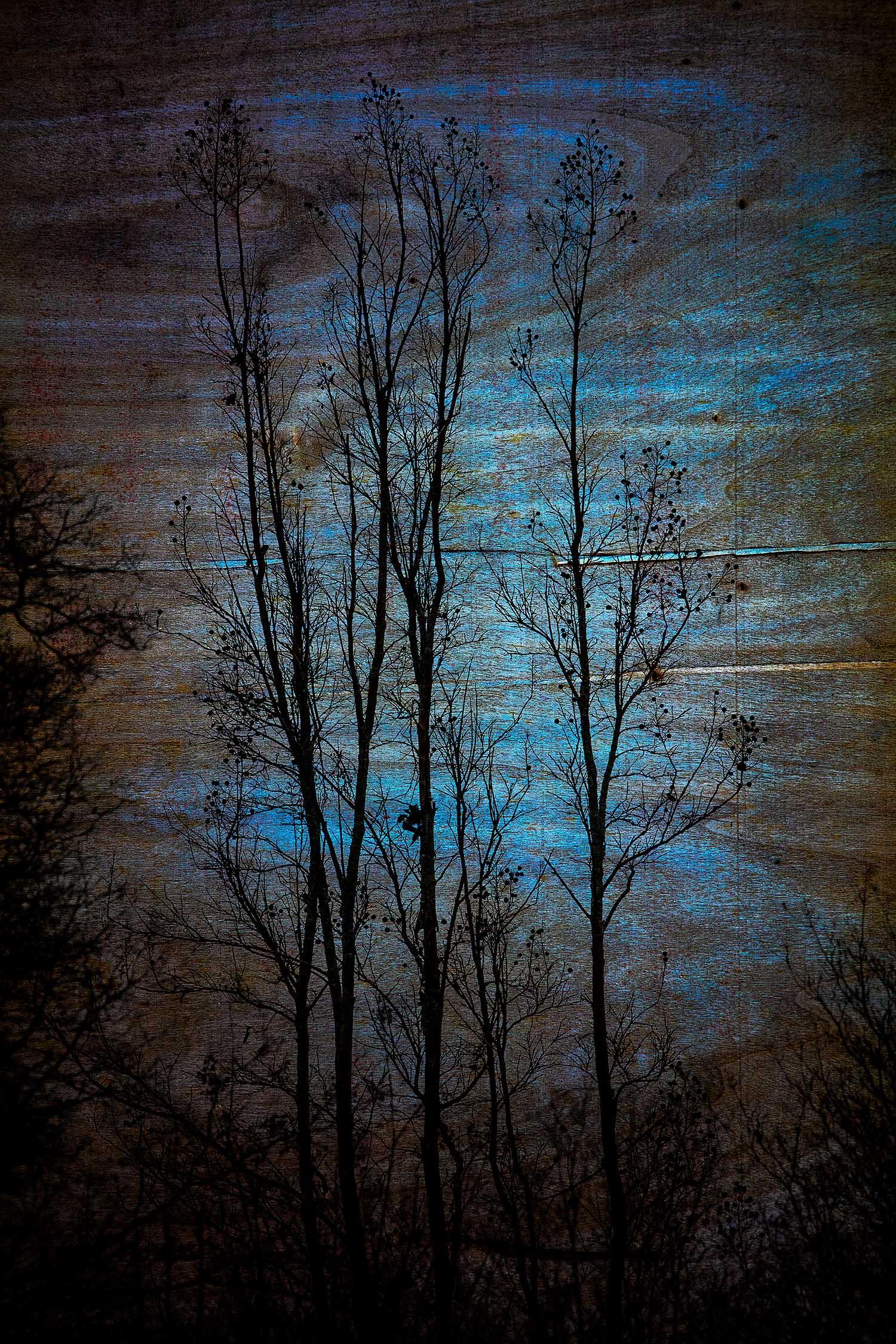 Trees, Smithtown, NY, 2019
