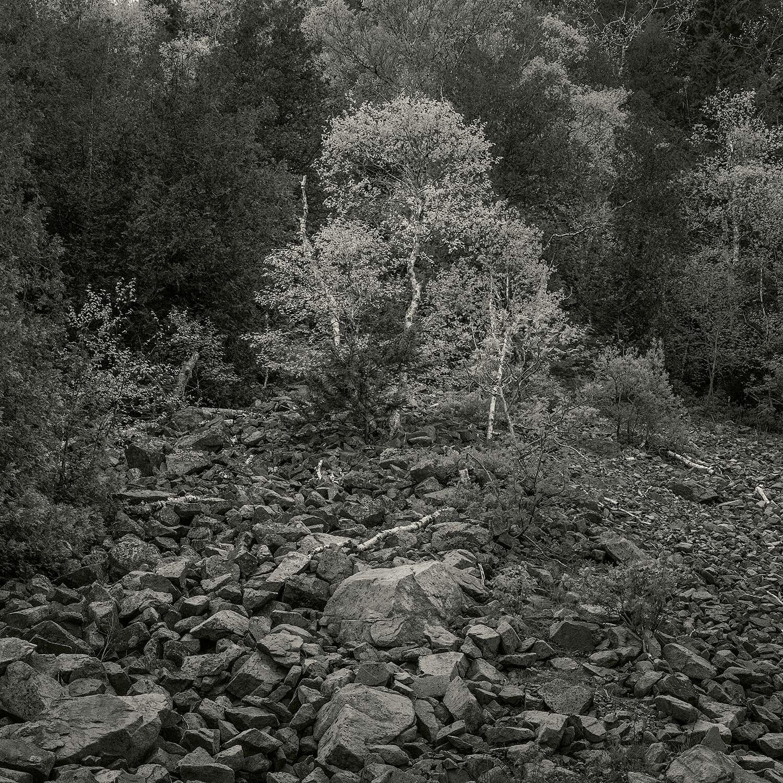 Trees at Long Pond, Acadia, 2014