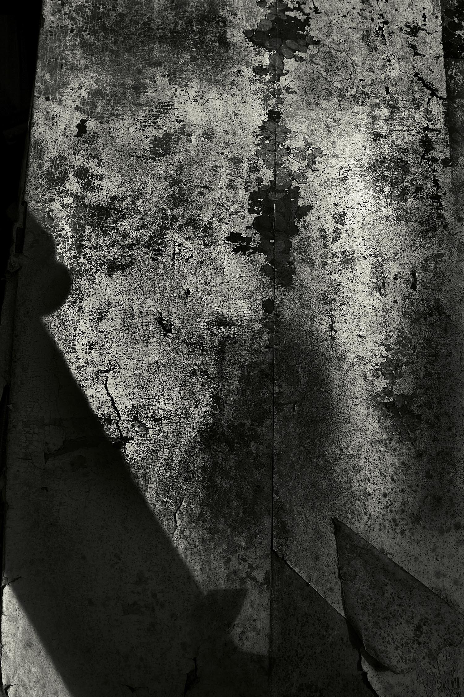 Weathered Wall Covering, Bar Harbor, Maine, 2008