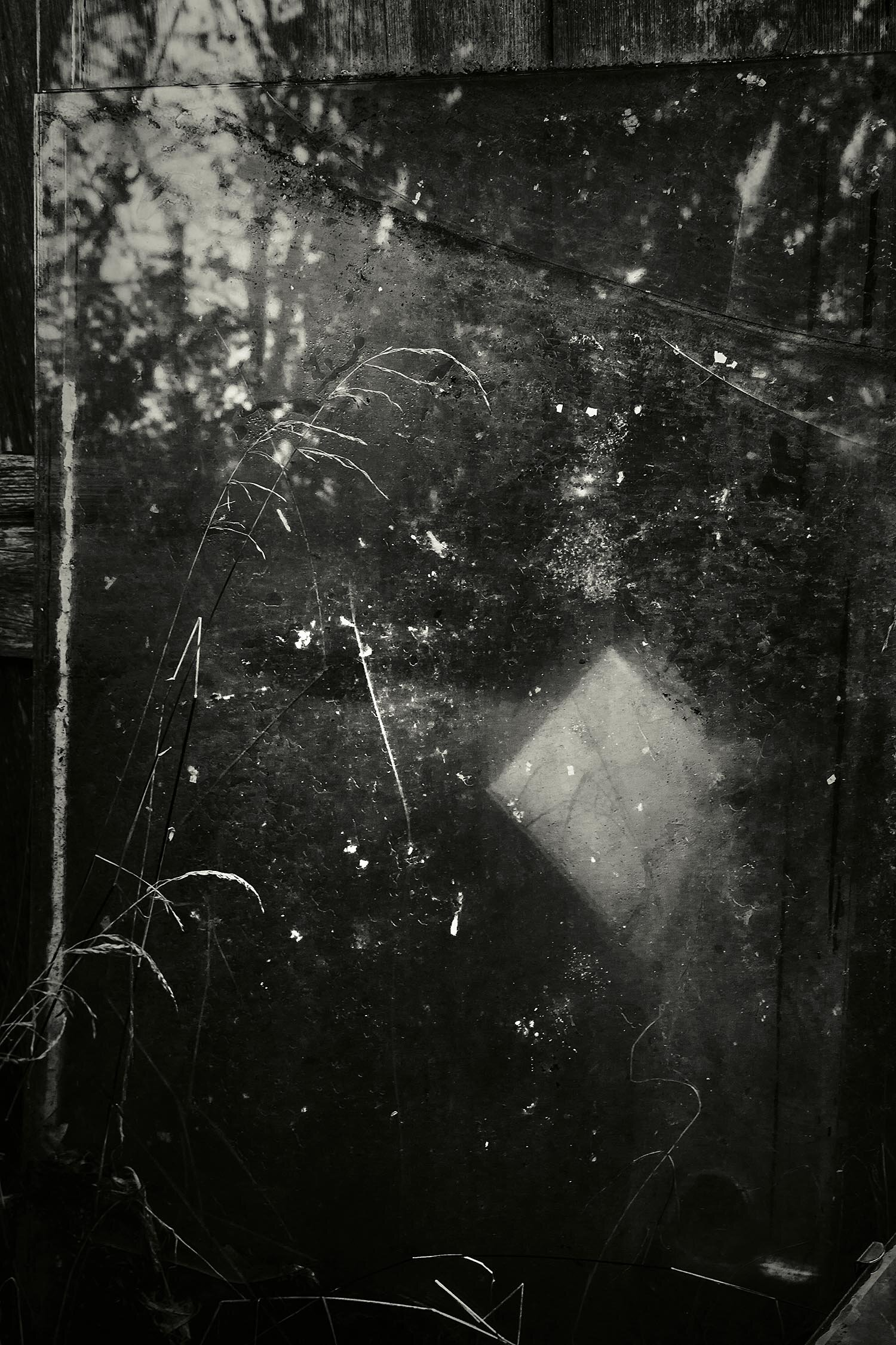 Weeds, Glass, Shed, Bar Harbor, Maine, 2010