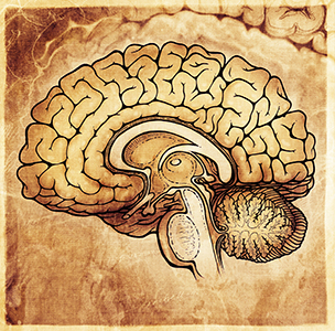 brain2_300.jpg
