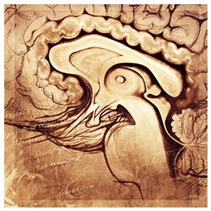 brain1_300.jpg