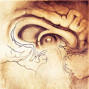 brain3_300.jpg
