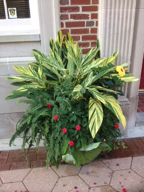 Container garden potted plant