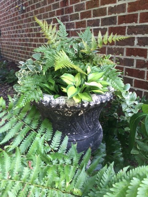 Container garden in urn with ferns