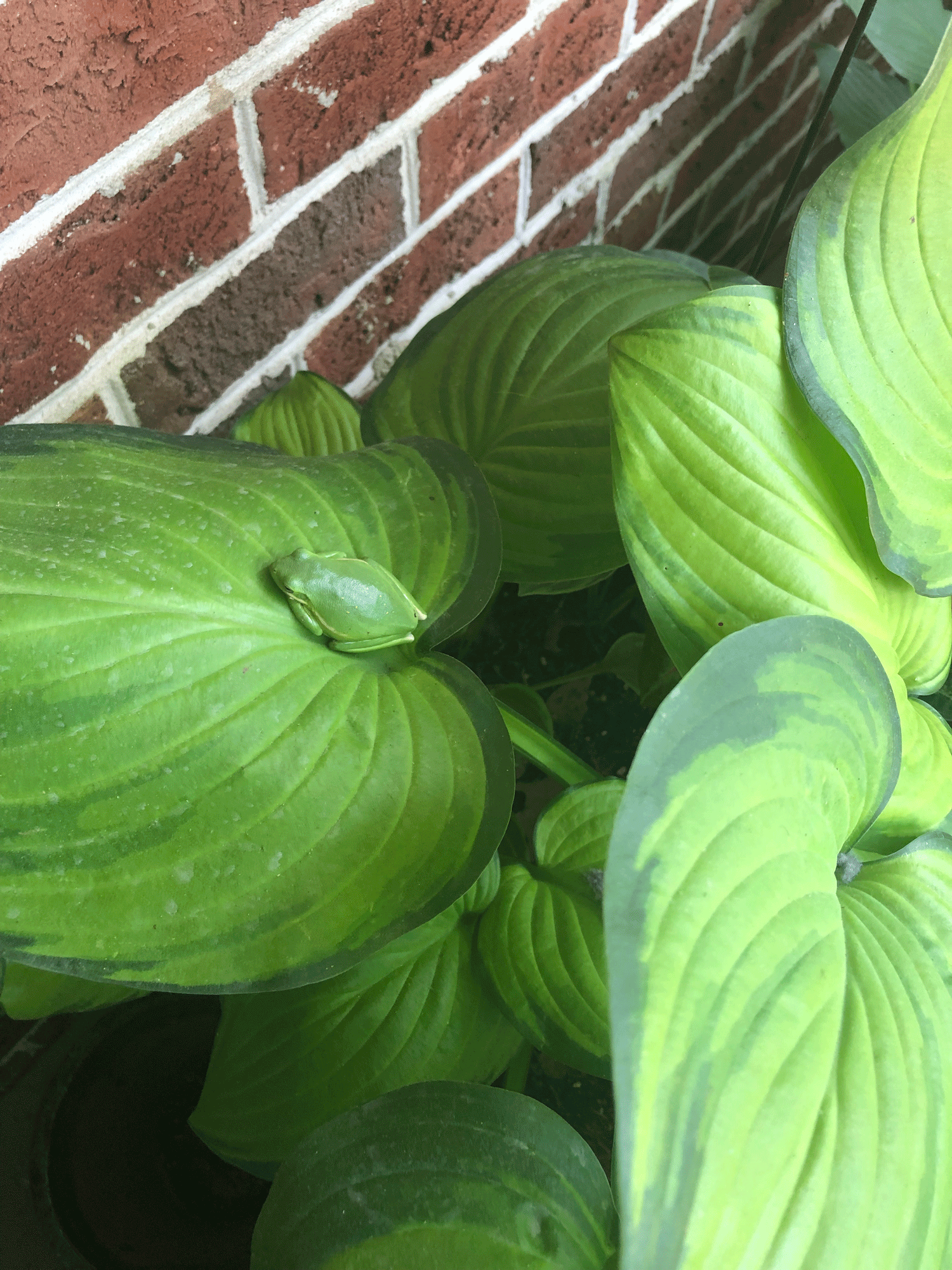 Leaves from container garden plant