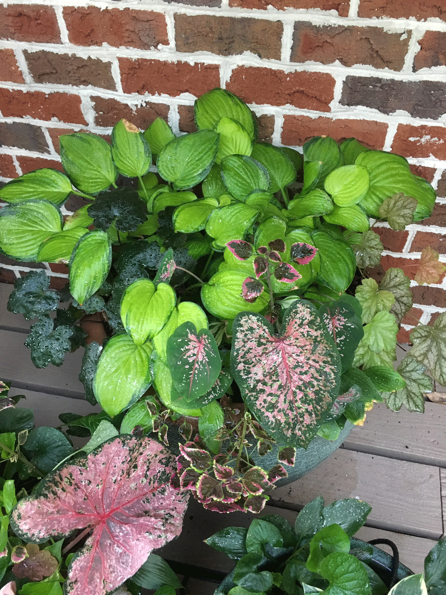 Potted container garden with leaves