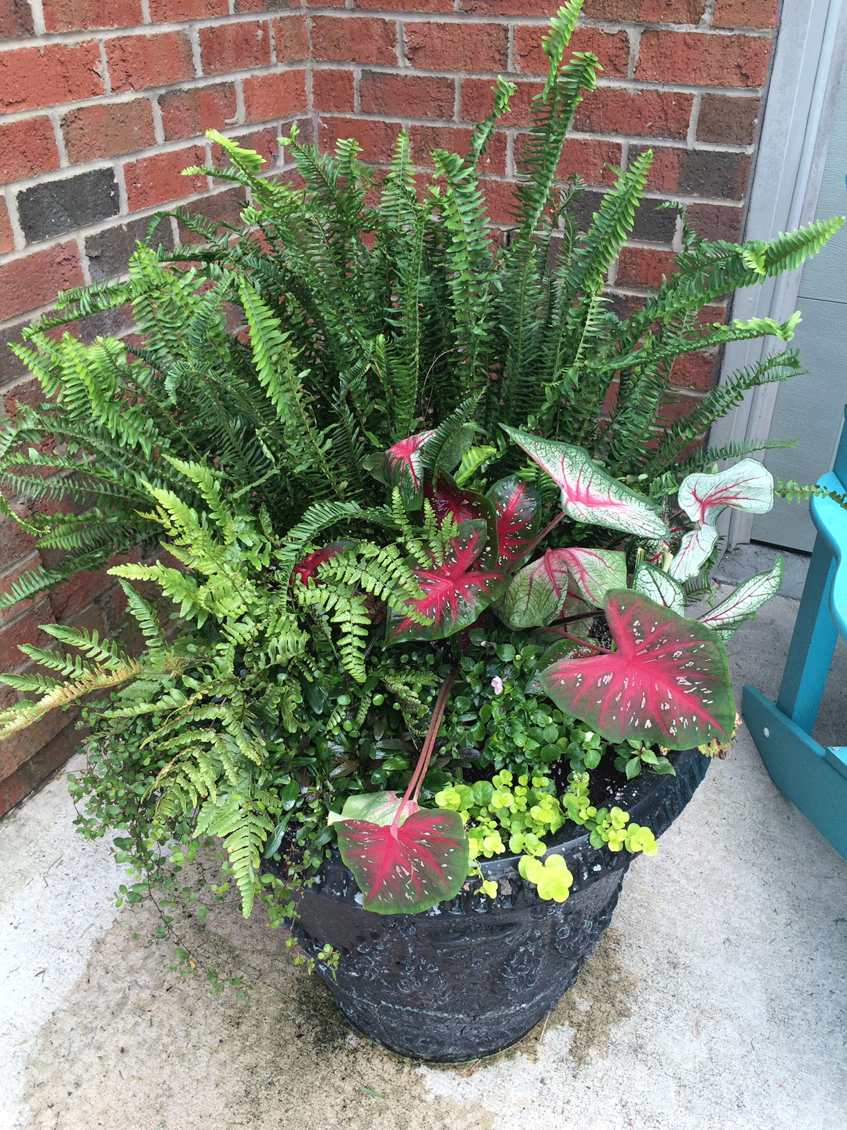 Container garden with mixed ferns, plants, flowers