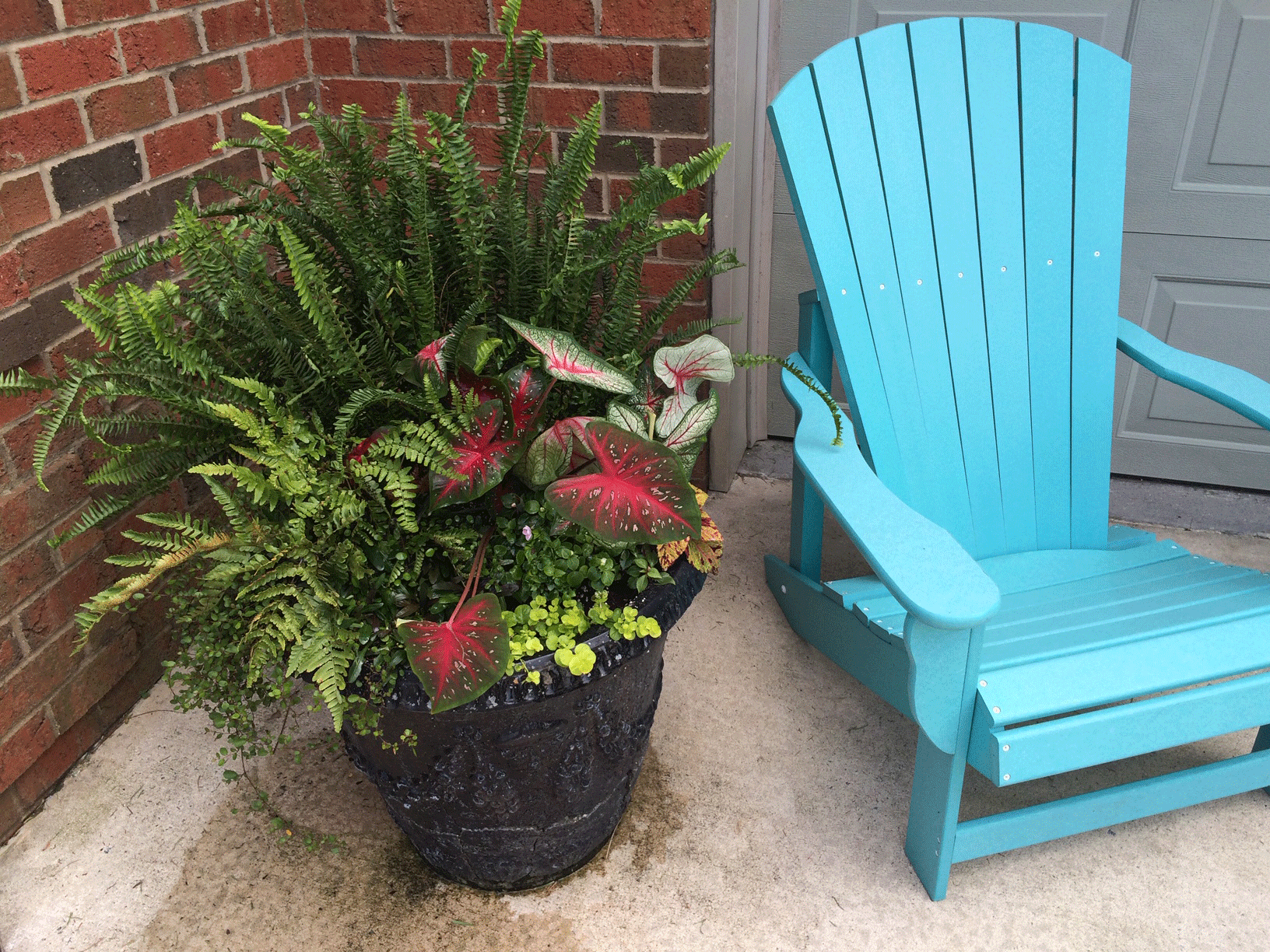 Potted container garden and plant with blue chair