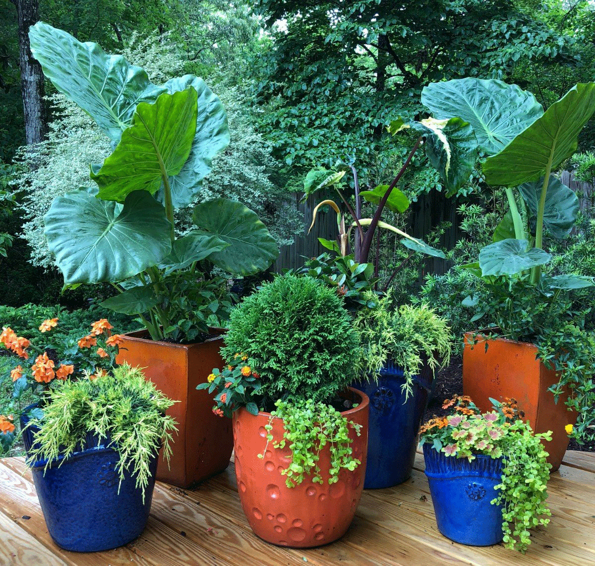 Multiple container gardens with large plants and flowers