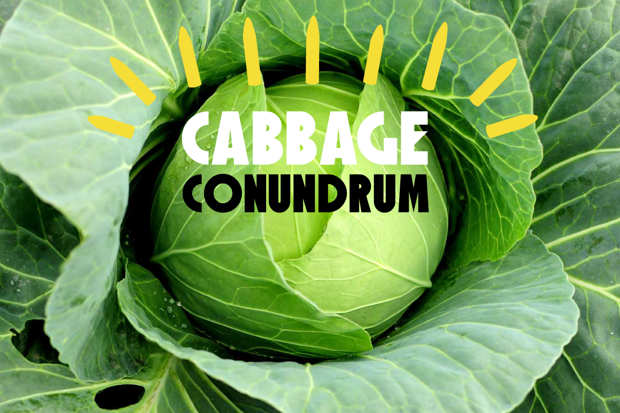 cabbageconundrom-01.png