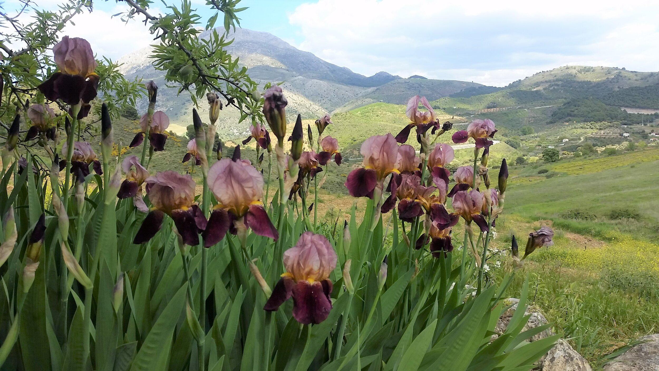 Garden Design Holiday Courses In Andalucia In Beautiful Mountain Location In Traditional Farmhouse Finca Las Morenas