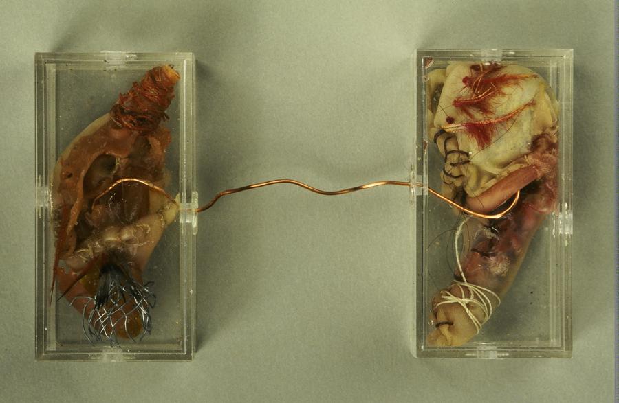"Transfusion Latex, feathers, wire, thread, plastic, 3"" x 9"" x 1/2"" 1998"