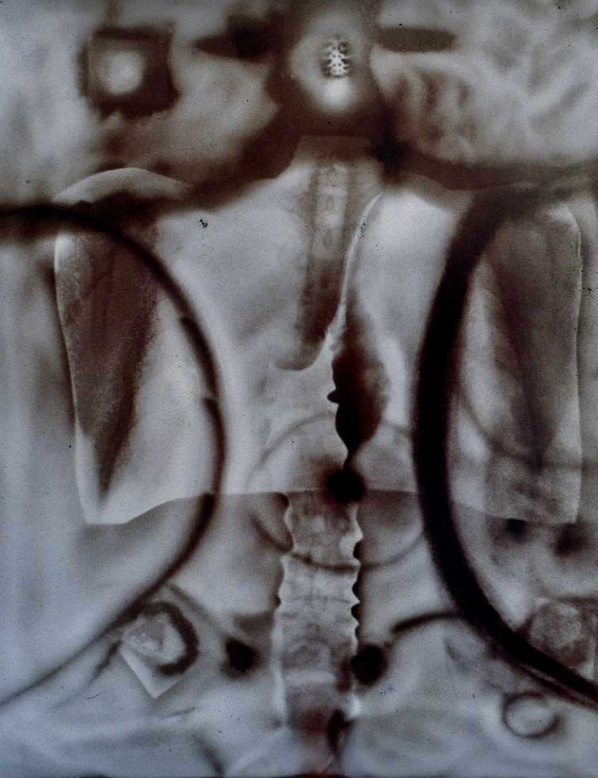 "GA011 Gold albumen photogram, 24"" x 16"", 1999"