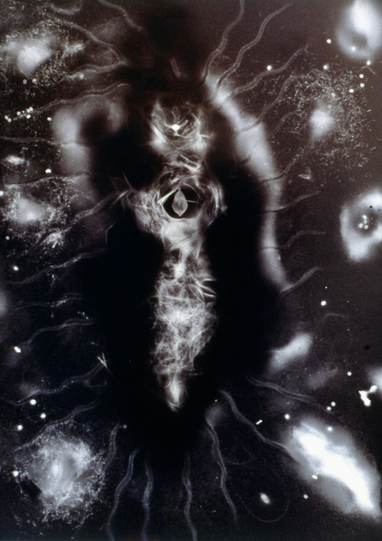 "GA016 Gold albumen photogram, 24"" x 16"", 1999"